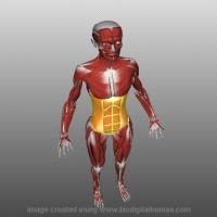 Μαθήματα ανατομίας σε 3D