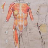Μαθαίνοντας να ζωγραφίζουμε το ανθρώπινο σώμα